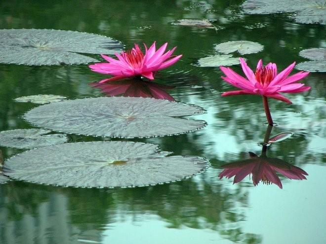 La metáfora de las hojas en el río - Método Vive Sin Ansiedad ...