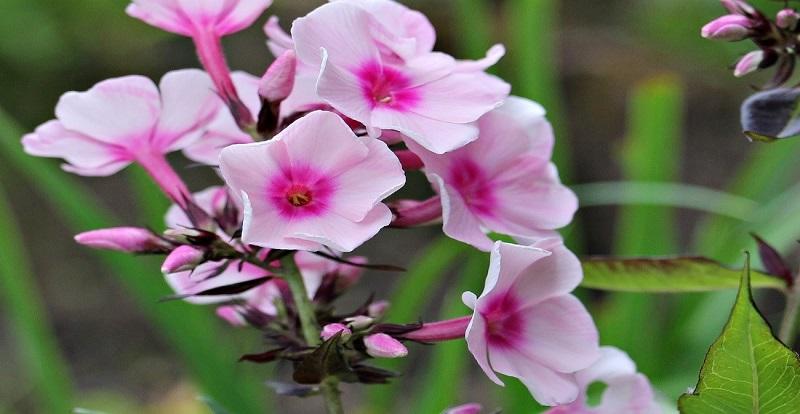 plantas remedio natural bebidas infusiones